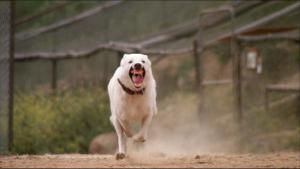 White Dog 2